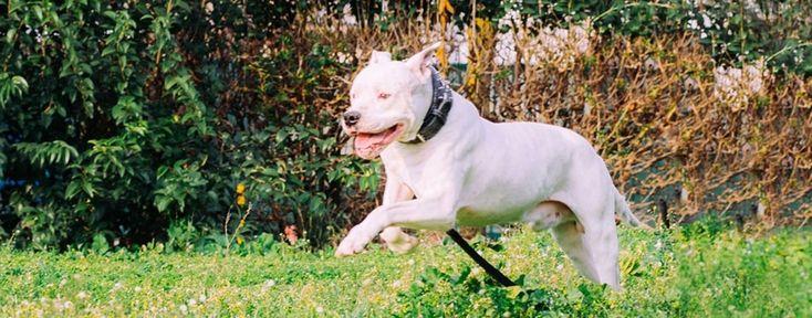 Εκπαίδευση σκύλου φύλακα απο τη Valkanas Dogs. Μάθετε περισσότερα στο http://www.valkanasdogs.gr/ekpaideusi/item/81-kathikonta-asfaleias