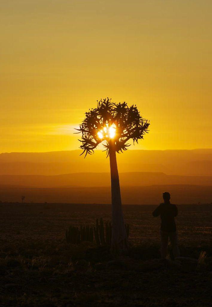 Beautiful desert sunsets