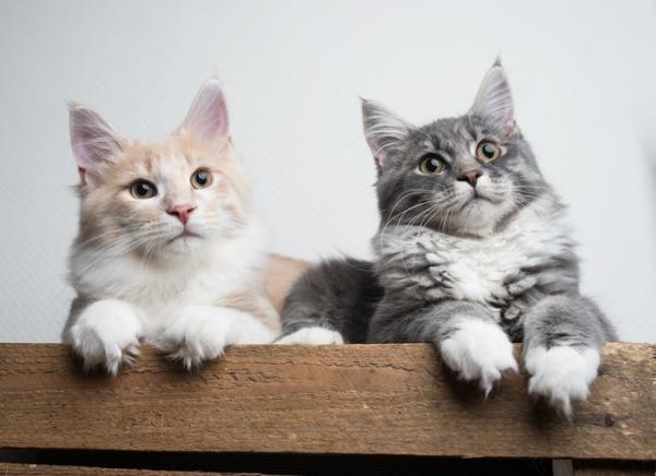 Pin De Dolores Rodriguez Egaña En Gatos Gatos árbol Para Gato Felino