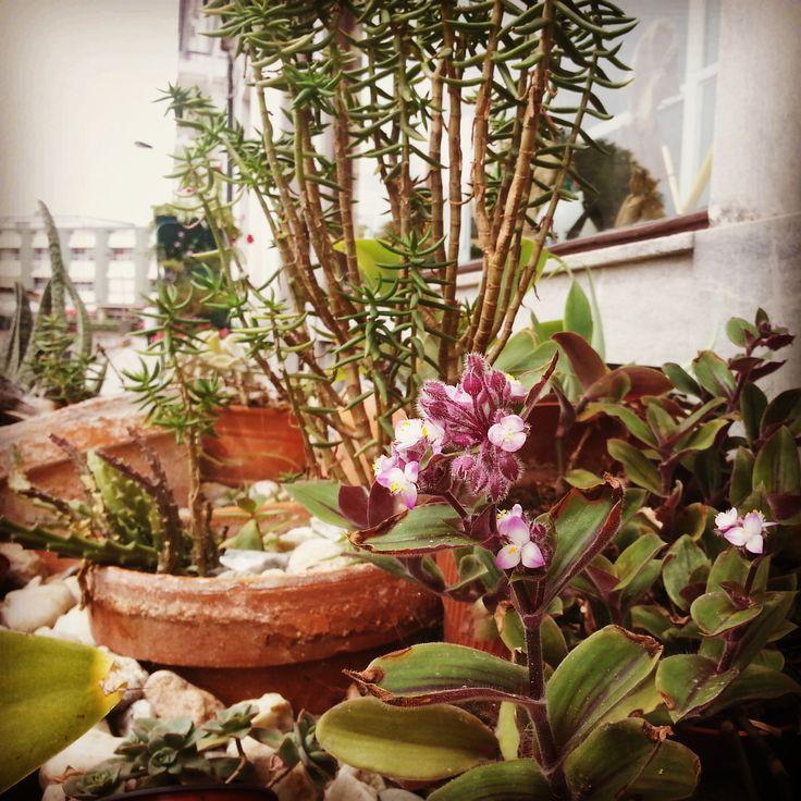 """#casamartelo O nosso """"jardim"""" sobre rodas"""