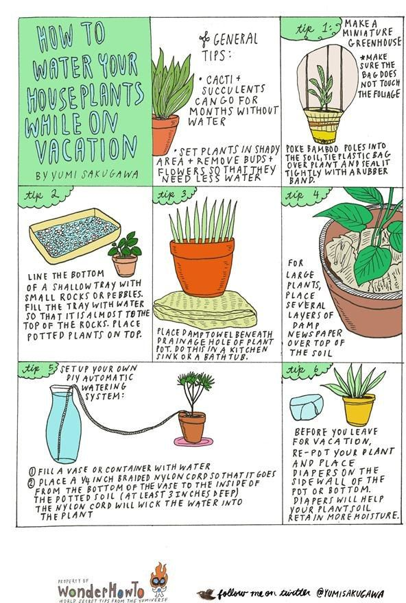 6 DIY Tips for Watering Your Houseplants While Away on Vacation