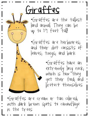 """The Fabulous First Grade: Symmetry, Long """"oo"""" Zebras, Bossy R, Zoo Animals, AHH!!"""