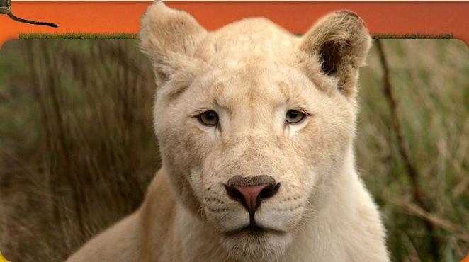 årskort til Blåvand zoo