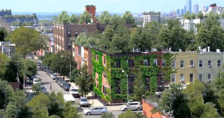 Turning Rooftops Into Veggie Paradise | What Design Can Do Blog