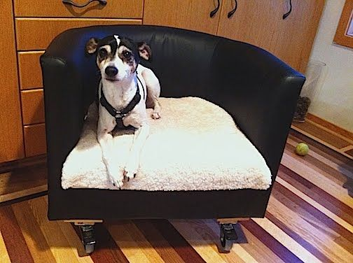 Ikea Hackers: Rolling Dog Bed v2