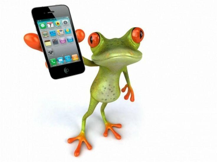 21 best Funny Frogs images on Pinterest   Ranas divertidas, Ranas y ...