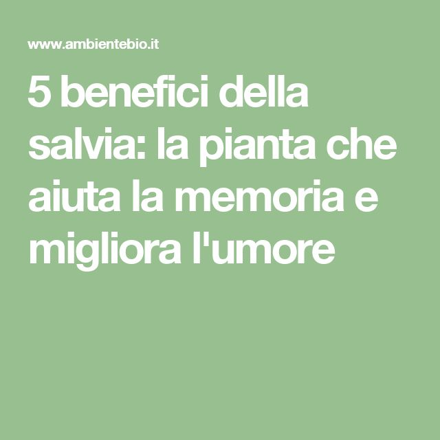 5 benefici della salvia: la pianta che aiuta la memoria e migliora l'umore