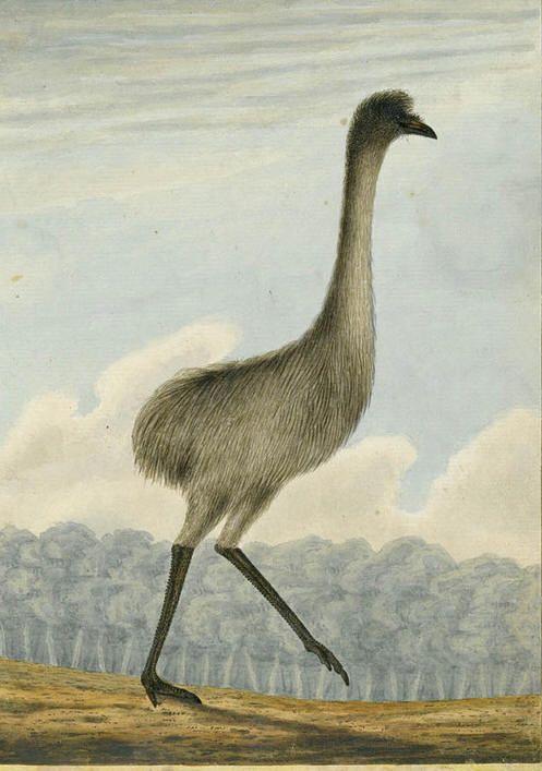 The Emue