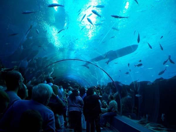 welt meiste erstaunliche riesiege aquarien attraktion