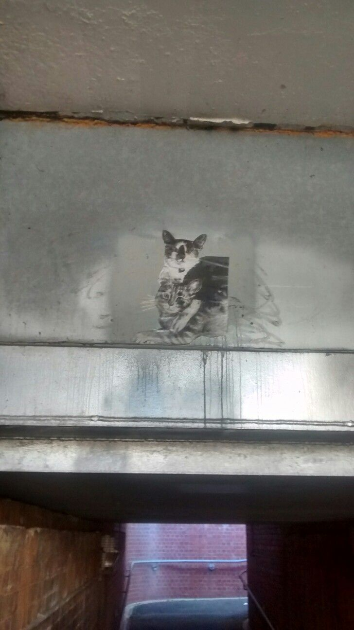 Cat on train underpass