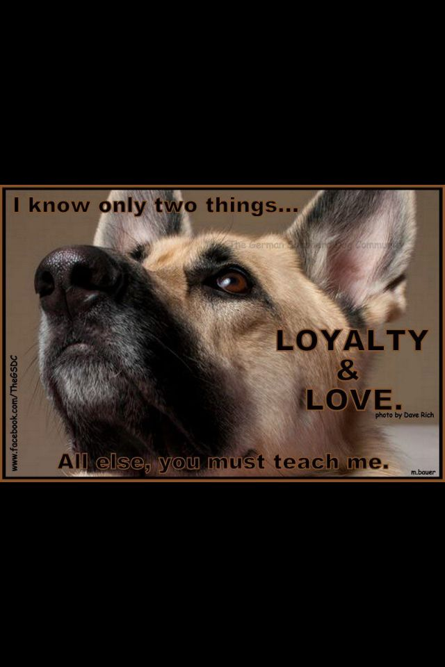 56 Best Images About German Shepherd Quotes On Pinterest
