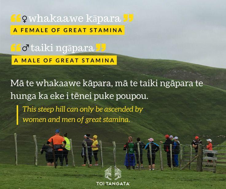 """At an Atua Matua wānanga in Kahungunu last month, this hill was one of the many that whānau climbed that day. This week, Mason brings us two kupu: """"whakaawe kāpara"""" and """"taiki ngāpara"""": a female or male of great stamina. #toitangata #kupuotewiki #wordoftheweek #tereo #Māori #toitekupu #ourbackyard #kahungunu #atuamatua #mountaincliming #maunga #hawkesbay"""