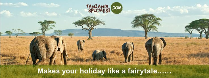 Enjoy the amazing facts about Enjoy wildest feel of elephants who actually enjoys every bit of their day-to-day activities like eating.