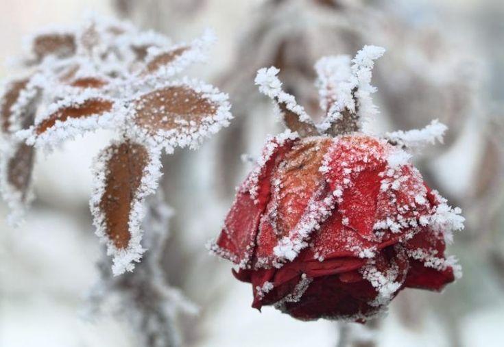 Téli kert