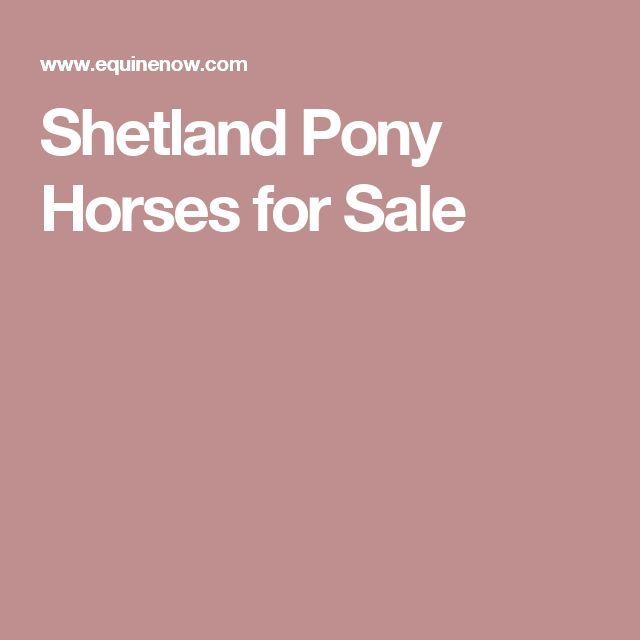 Shetland Pony Horses for Sale