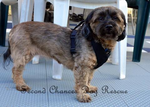 Sasha Victoria Adoptables Dog Rescue Rescue dogs, Dogs