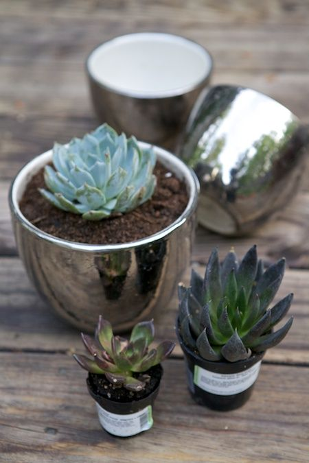 Succulents In Silver Pots Garden Pinterest Plants And Planting