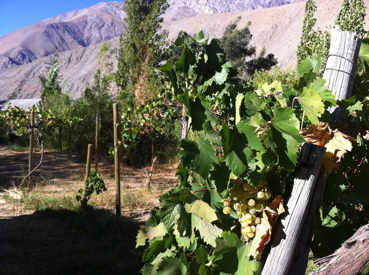 Pisco Elqui, Valle del Elqui. Foto de Álvaro Duarte.