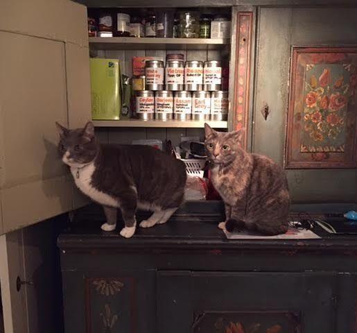 Katter och te - vad mer kan man begära? Den här fina bilden där Pops och Stevie poserar så snyggt med teburkarna fick vi av vår kund Maria. Mjau!
