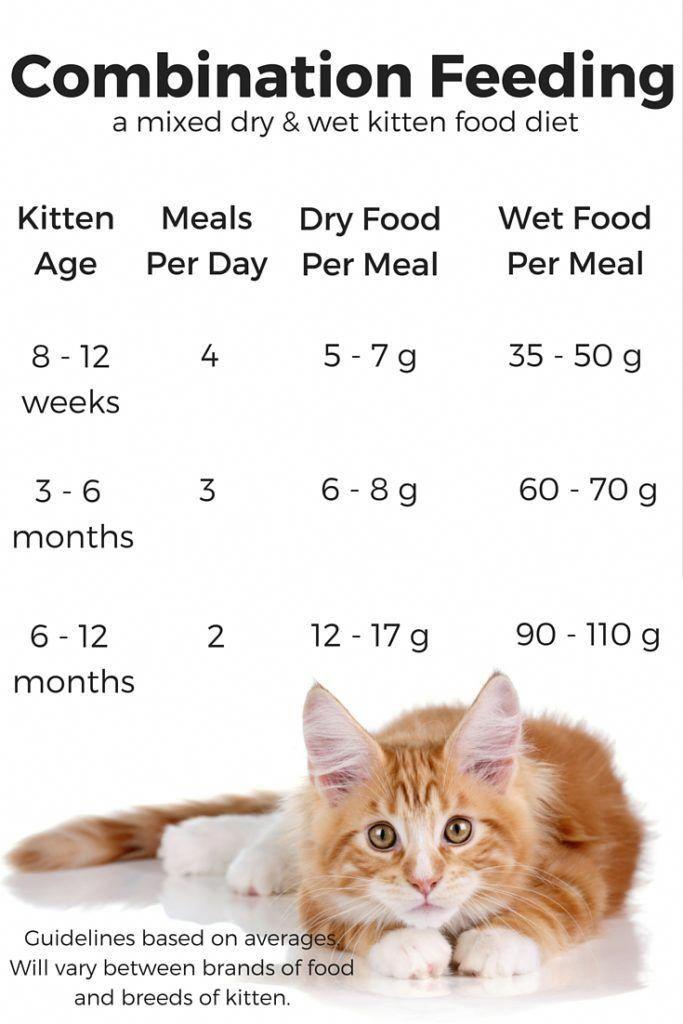 Feeding Your Kitten Helpful Kitten Feeding Schedules And Charts Kitten Food Feeding Kittens Kitten Care
