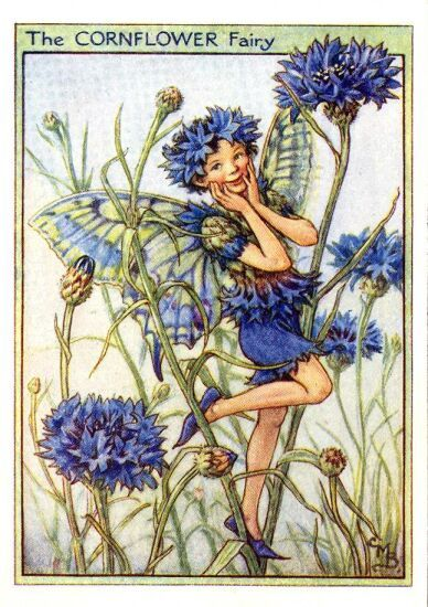 Google Image Result for http://lorisfantasyworld.files.wordpress.com/2011/04/cornflower_flower_fairy.jpg
