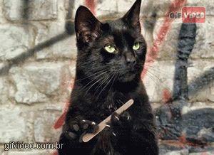 Gif Gif animado gato lixando a unha | Gif Video - Site de gifs animados | Os melhores gifs animados da internet