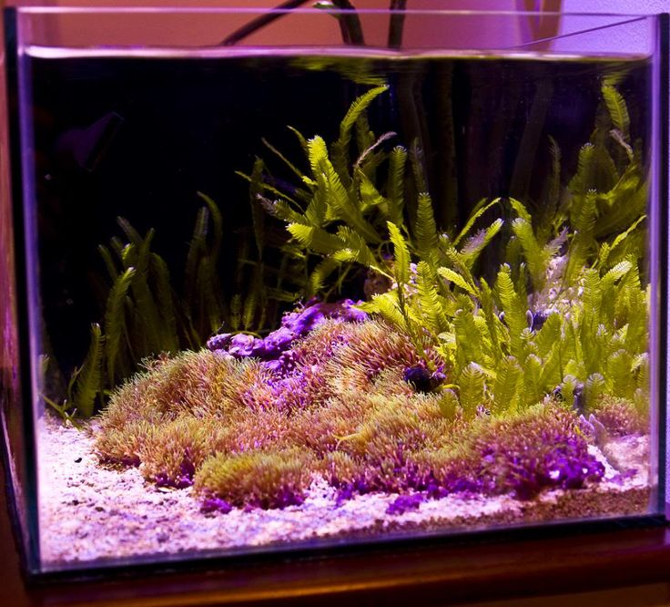 17 best images about nano reefs on pinterest all things for Aquarium recifal nano