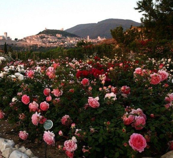 Roseto Giardino 'Quando fioriranno le rose' - Assisi, Umbria, Italia
