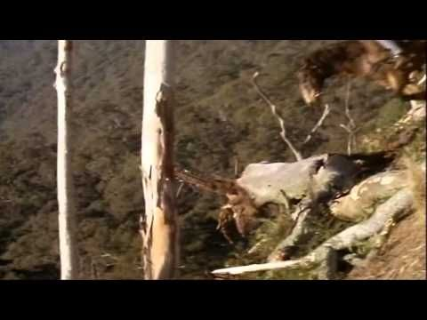 Return To Snowy River-The Descent (HD Quality) Love this part. Man has to have someone to trust.