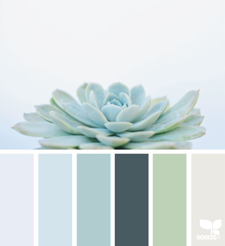 {succulent hues} image via: @1lifethroughthelens