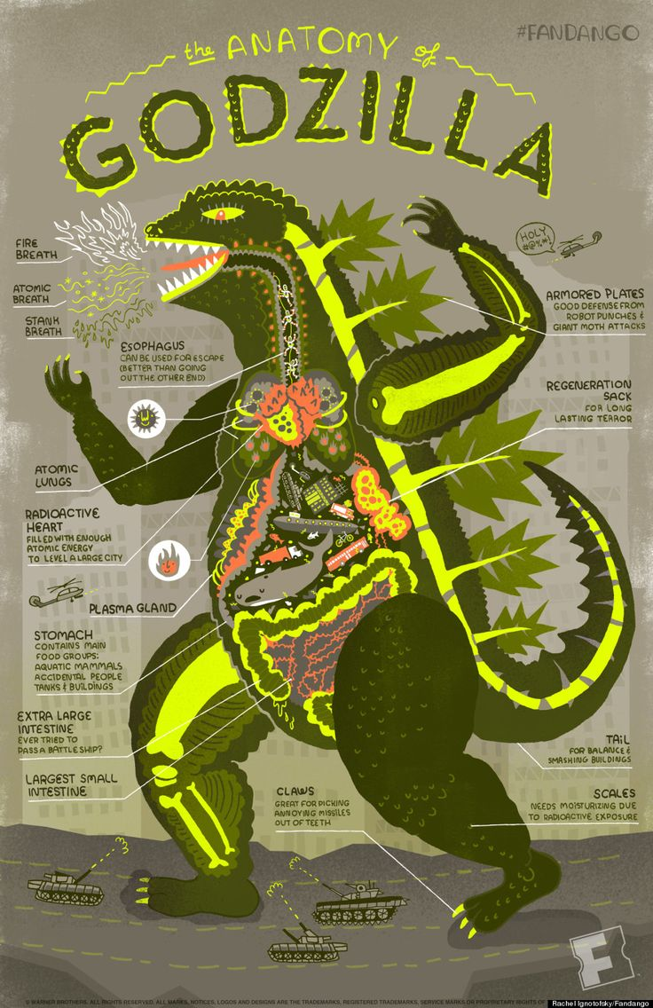 Anatomy Of Godzilla Infographic Shows Whats Inside The Beast