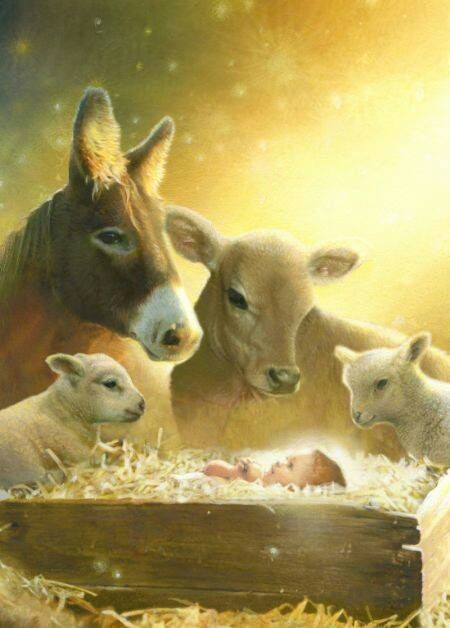 'Look Everyone. Here's our Creator, Master, and Friend. We Love You, Jesus.' - Christmas animal nativity