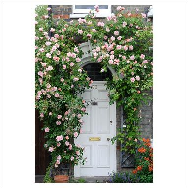 I Love The Idea Of Climbing Roses Around The Front Door Or