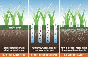 Redding, CA Core Aeration - Andrews Lawn Care