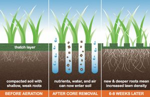 Redding, CA Core Aeration - Andrews Lawn Care