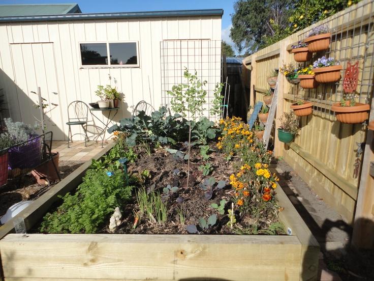 My vegi patch. Broccoli, red cabbage, garlic, onion, bok choi, peas, cauliflower, purple carrots, spring onions, spinach & lettuce.