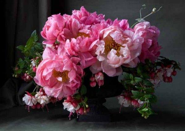 Lewis Miller - coral charm peonies and fuchsia #LewisMillerDesigns ...
