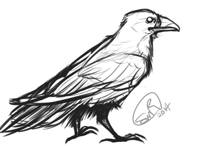 Realistic Raven Sketch By Zylaphonefish On Deviantart In 2020