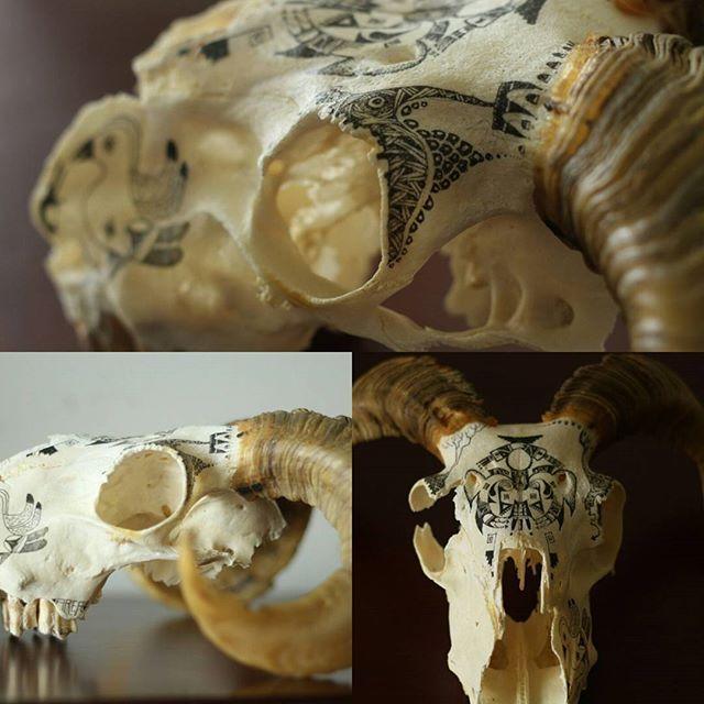 #skulldesignarea51llanes #artforsale #skullpainting #skulldezign #molotow #goatskull #taxidermy #skull #darkart #goth