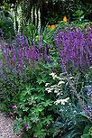 Perennial border with contrasting foliage plants, Geranium psilostemon, Salvia numerosa 'Amethyst', Achillea tagatea; Gary Ratway garden
