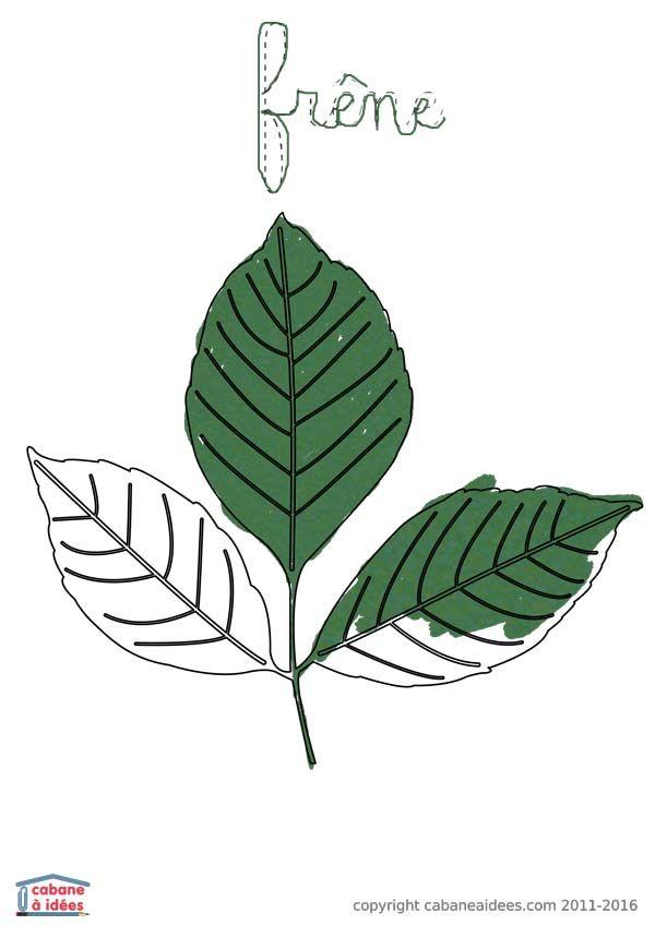 Super Plus de 25 idées uniques dans la catégorie Reconnaitre les arbres  BB52