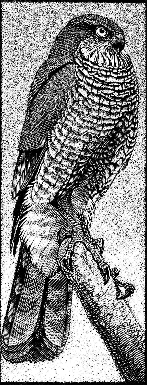 savannah monitor coloring pages | 1284 best Printmaking I like images on Pinterest ...