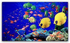 Как выбрать аквариумных рыбок Когда Ваш аквариум уже приобретен, имеются определенные подключенные устройства, которые уже настроены и полностью отрегулированы, то Вам остается только самое важное – это заселить Ваш водный мир замечательными жителями. Наконец наступил этот долгожданный день! ...  http://c.cpl1.ru/7kNM Статьи
