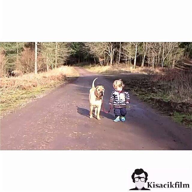 Terapi gibi , iyi geliyor  #kisacikfilm #bestfriend #cuma #therapy #children #dog
