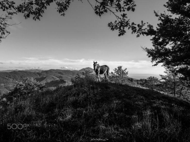 Horse in Solitude! - Attimi! It's time for Leica  © All Right Reserved Salvatore Lio - Photography. 2016 Siamo saliti fino a quota 1200, qualcosa di veramente fantastico, un aria buonissima e tante emozioni!