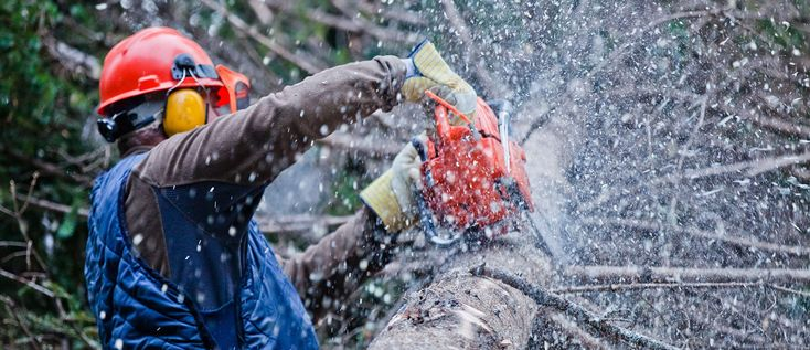 Looking for professional tree removal service in Adelaide? Call CTL Services - Complete Tree Lopping today on 0411 550 409 for a free quote!
