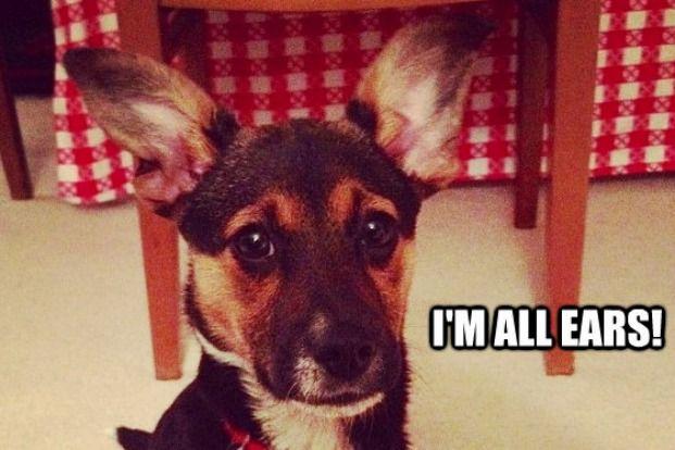 Funny Pet Memes - Pet360 Pet Parenting Simplified