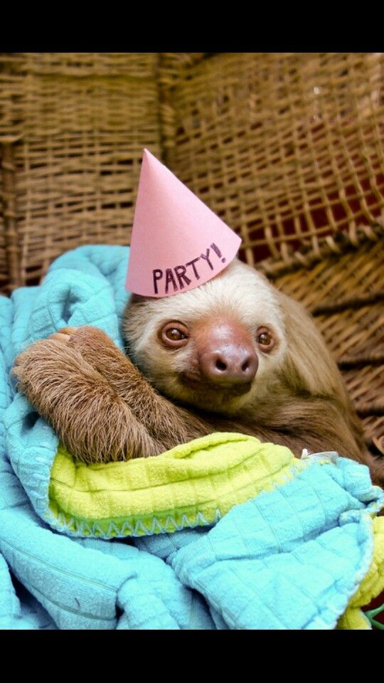 Sloth in party hat - photo#31