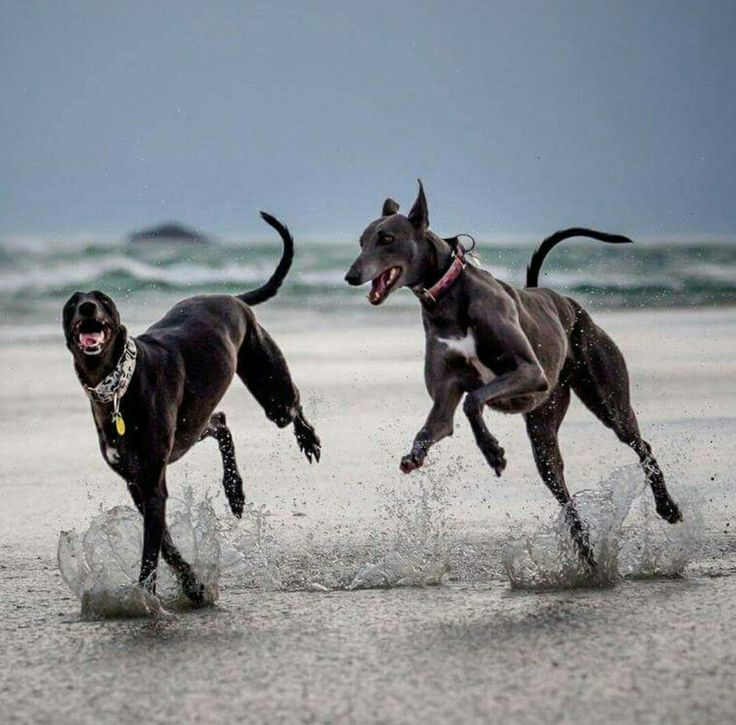 Dog Run - http://allaboutmydogs.com/dog-run-best-dog/