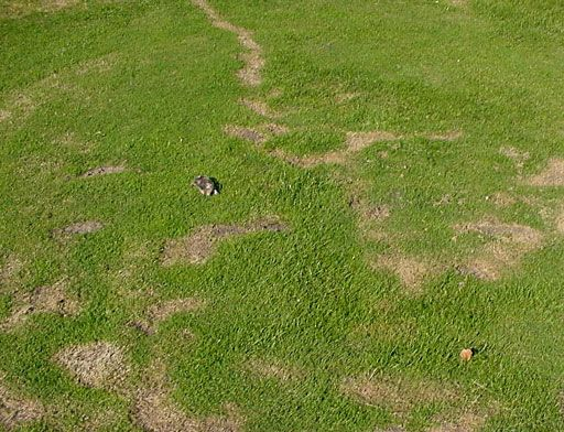 How To Get Rid Of Moles In Your Yard 6 Working Ways Garden Ideas Pinterest Mole Yards
